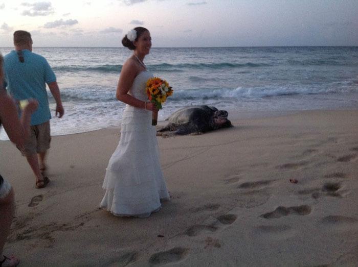 Skildpadde til bryllup
